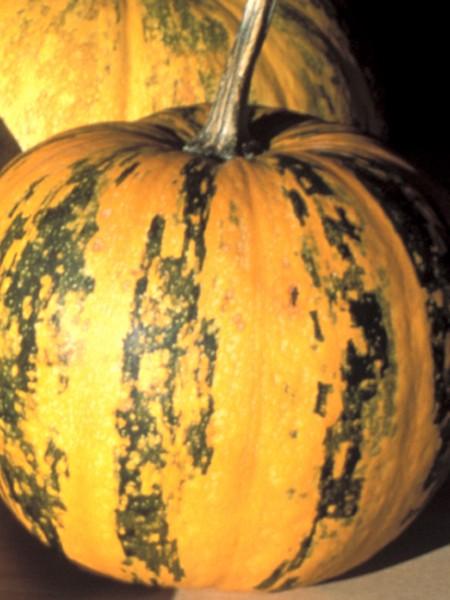 Pumpkin 'Kakai'