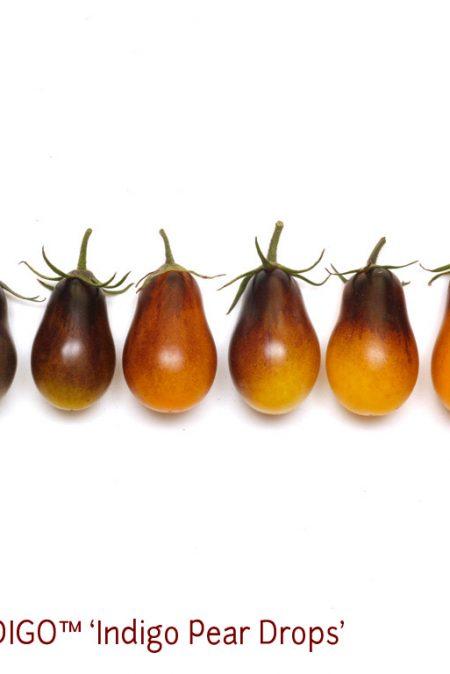 OSU INDIGO6 Pear Drops1