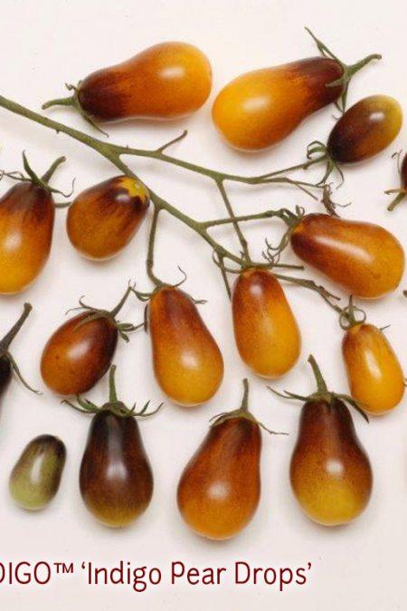OSU INDIGO6 Pear Drops2