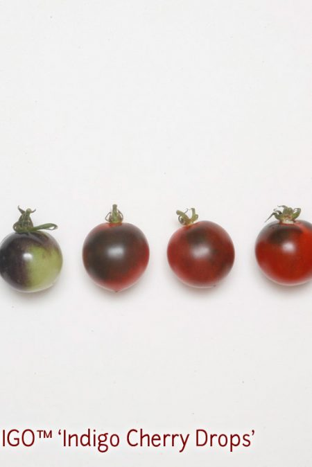 OSU INDIGO8 Cherry Drops