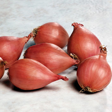 Onion 'Conservor' shallot