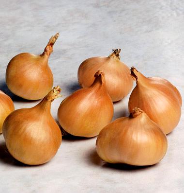 Onion 'Saffron' shallot