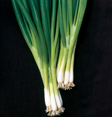 Onion 'Evergreen' hardy white scallion