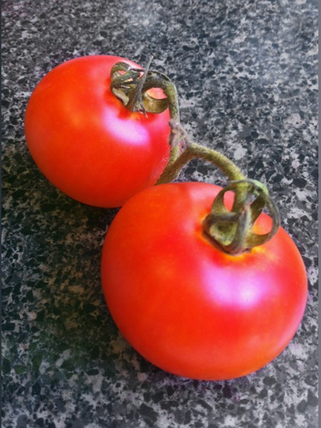 Tomato 'Skykomish'