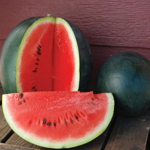 Melon 'Sugar Baby' Watermelon Grafted Mighty Veggie | Log House ...