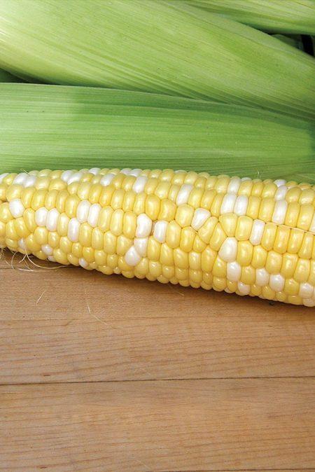 Corn 'Luscious' Bicolor