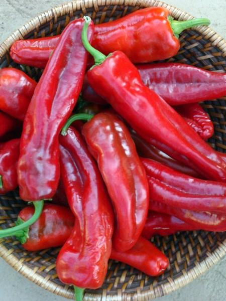 Pepper (Hot) 'Giant Ristra'