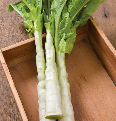 Chinese Celtuce 'Spring Tower'