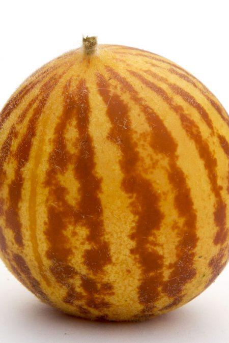Melon 'Rich Sweetness' Mini Melon