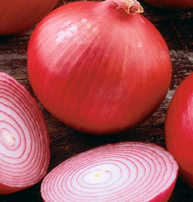 Onion 'Mars'