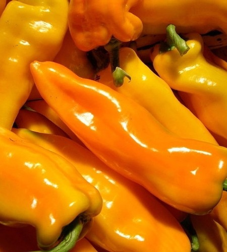 Pepper (Sweet) 'Gatherer's Gold' non-bell