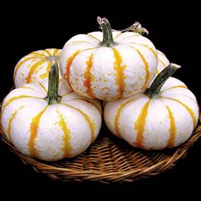 Pumpkin 'Lil Pump-ke-mon'