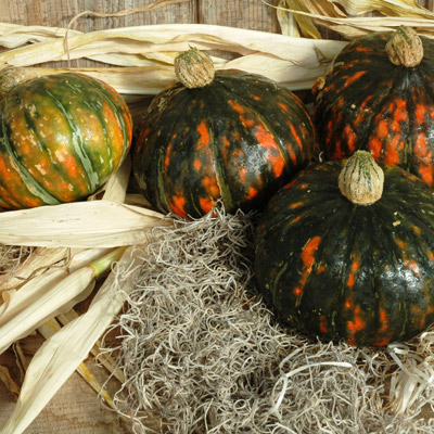 Squash (Winter) 'Speckled Pup' kabocha