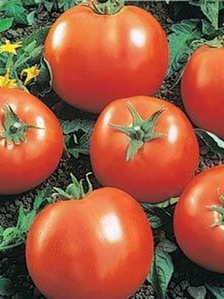 Tomato 'Ball's Beefsteak'