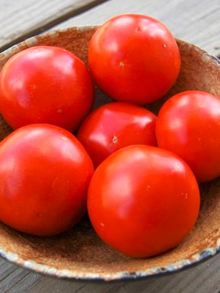 Tomato 'Iron Lady'