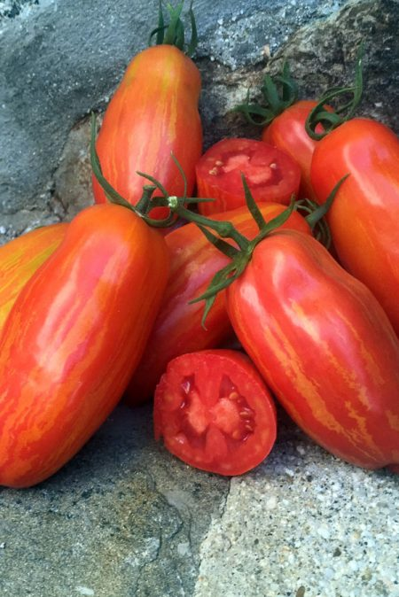 Tomato 'Marzano Fire' Artisan Series Sauce Tomato