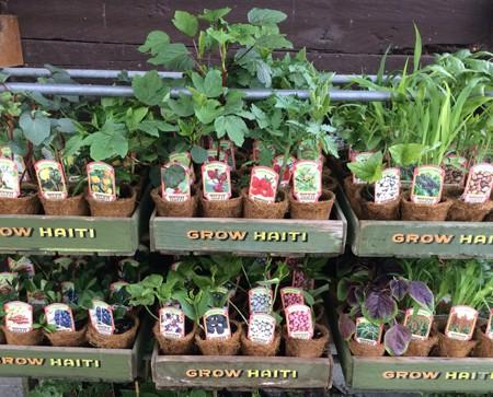 Grow Haiti