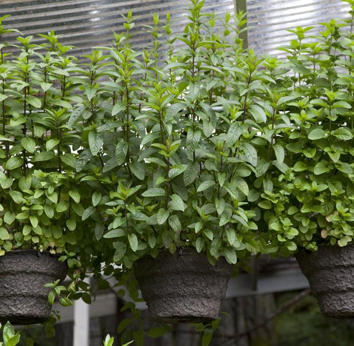 Herb Baskets