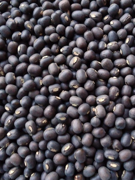 Heirloom Bean 'Black' Lentil Bean