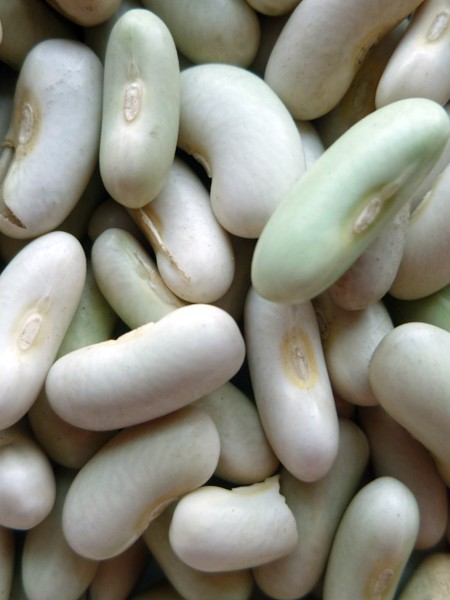 Heirloom Bean 'Flageolet Vert' Fresh/Dry Shell Bean