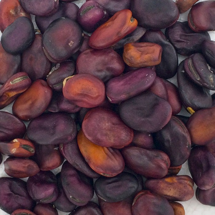 Heirloom Bean 'Frog Island Nation' Fava Bean