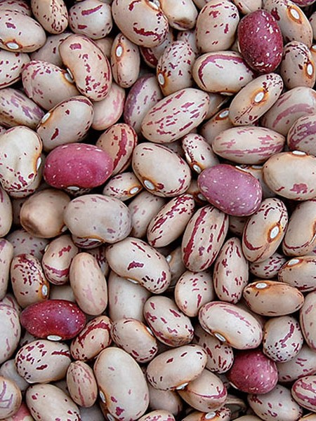 Heirloom Bean 'Lina Sisco's Bird Egg' Fresh/Dry Shell Bean