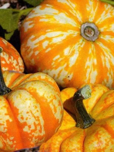 Pumpkin 'Hooligan'