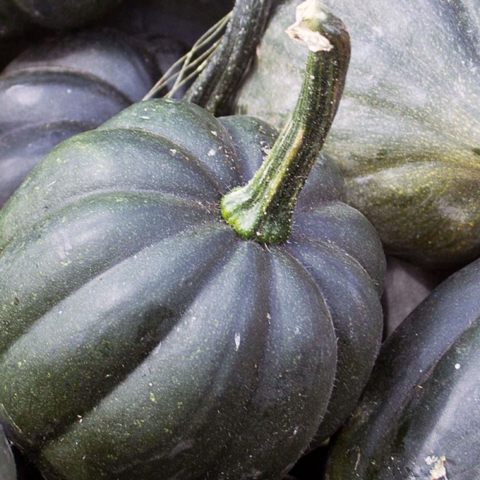 Squash (Winter) 'Table King' acorn