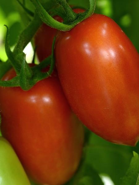 Tomato 'Marzinera'