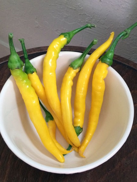 Heirloom Pepper (Hot) 'Sarit Gat'