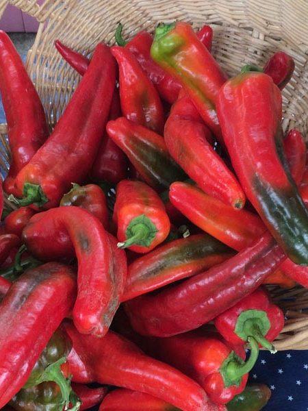 Pepper (Sweet) 'Italian Sweet' non-bell
