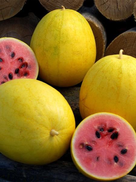 Melon 'Golden Midget' Watermelon