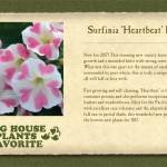 Petunia Heartbeat Favorite Card-websize