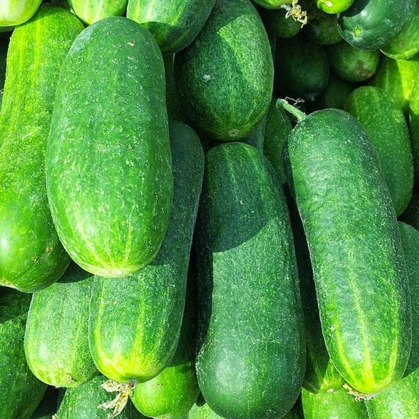 Cucumber 'Gateway' Slicing