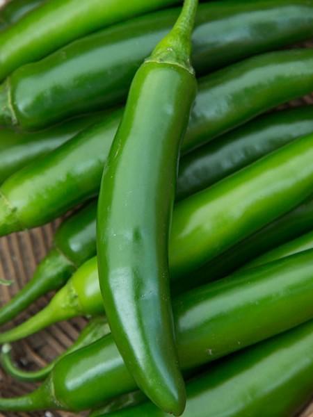 Pepper (Hot) 'Flaming Jade' (AAS)