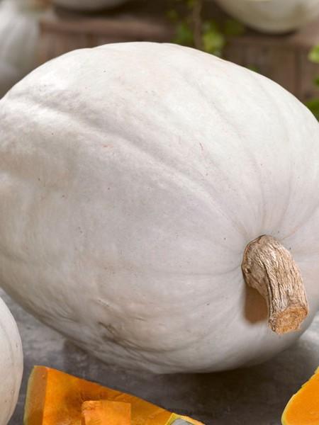 Pumpkin 'Super Moon' F1 (AAS)
