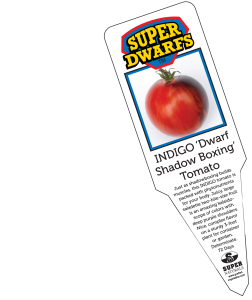 Indigo Dwarf Shadowboxing Tomato label