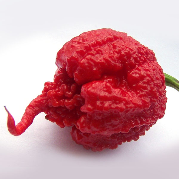 Heirloom Pepper (Blazing Hot) 'Carolina Reaper'