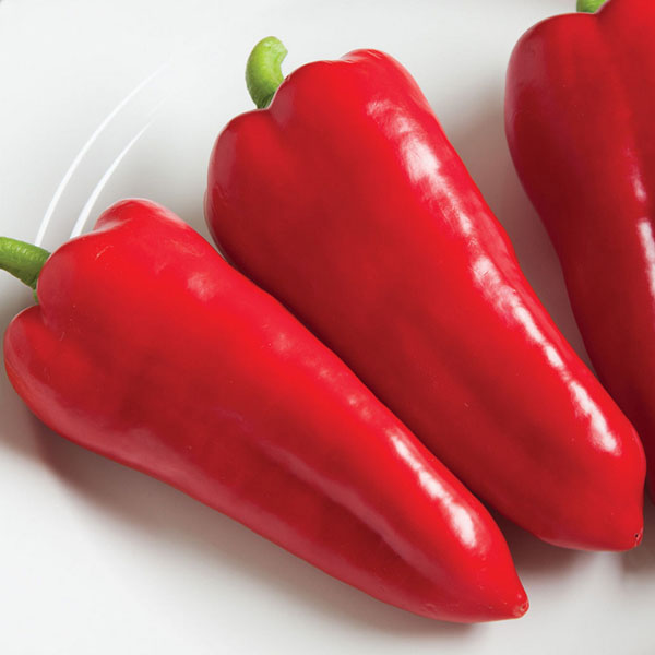 Pepper (Sweet) 'Cornito Rosso'