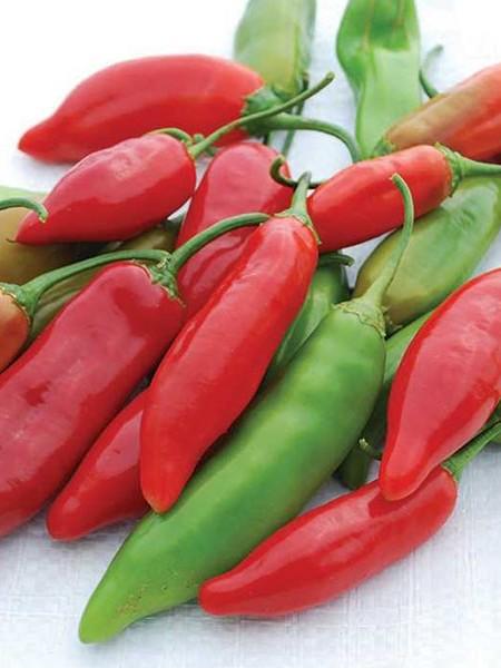 Pepper (Sweet) 'Aji Delight'