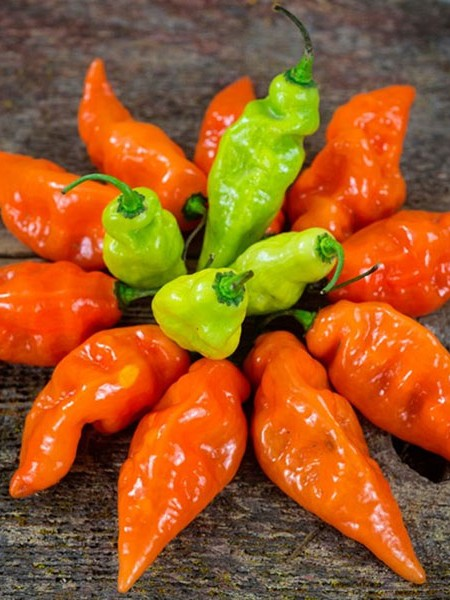 Pepper (Sweet) 'Habanada'