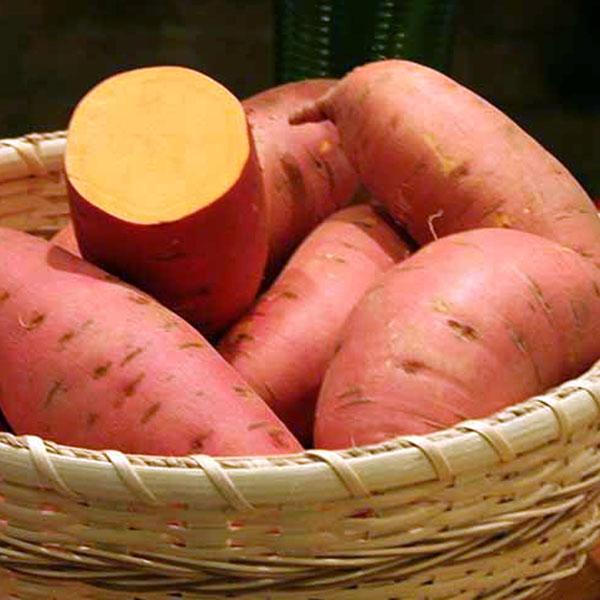 Sweet Potato 'Covington'