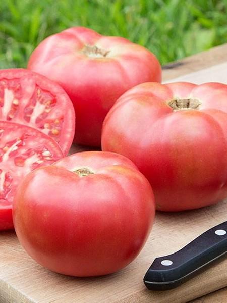 Tomato 'Damsel' Grafted Mighty 'Mato