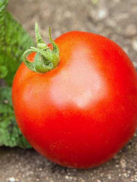 Tomato 'Dirty Girl'