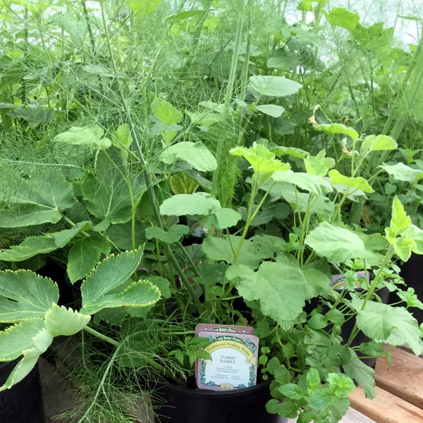 Traditional Healing Herb Remedy Containers 'Tummy Basket'