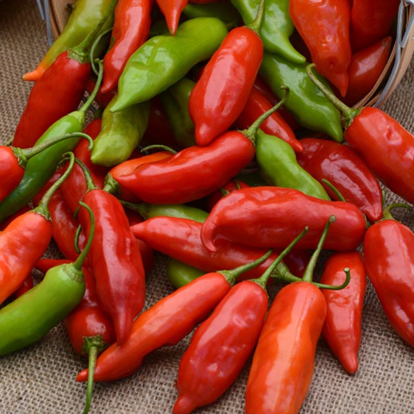 Pepper (Sweet) 'Aji Rico' non-bell