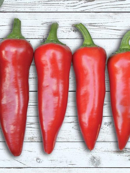 Pepper (Hot) 'Flaming Flare' (AAS)