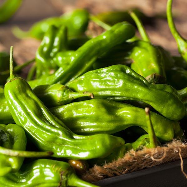 Pepper (Sweet) 'Takara Shishito' non-bell