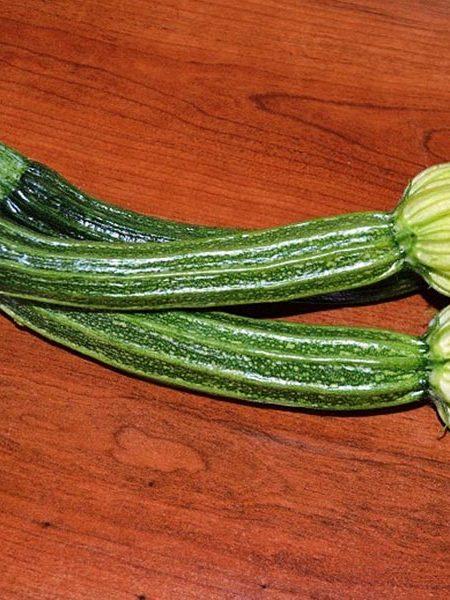 Squash (Summer) 'Cassia Romanesco' Italian Zucchini