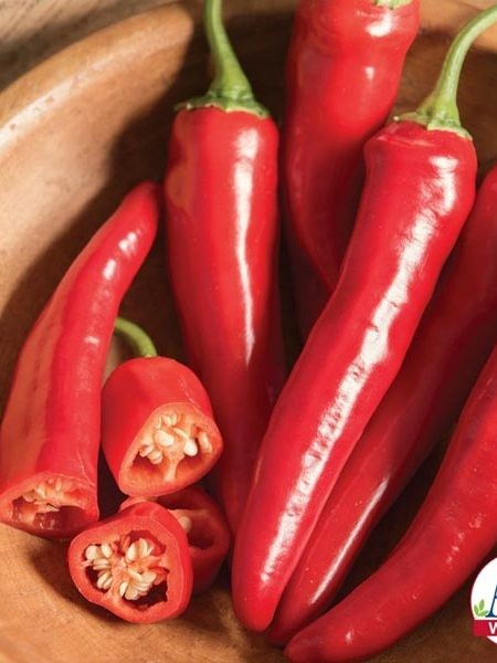 Pepper (Hot) 'Red Ember' (AAS)